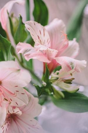 λουλουδια-για-διακοσμηση-γαμου-3