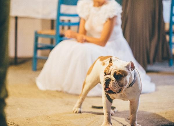 γαμος-σε-νησι-φωτογραφιες