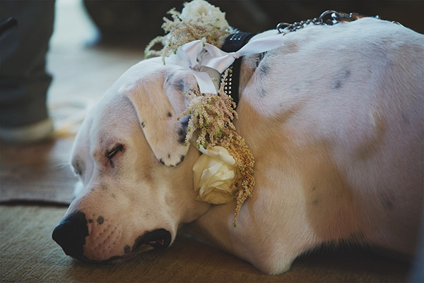 Pets as wedding guests