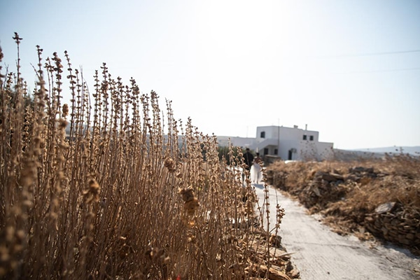 bohemian-summer-wedding-kythnos-pampas-grass_03