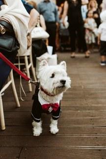 Πρωτοτυπη ιδεα για το σκυλακι σας τη μερα του γαμου σας